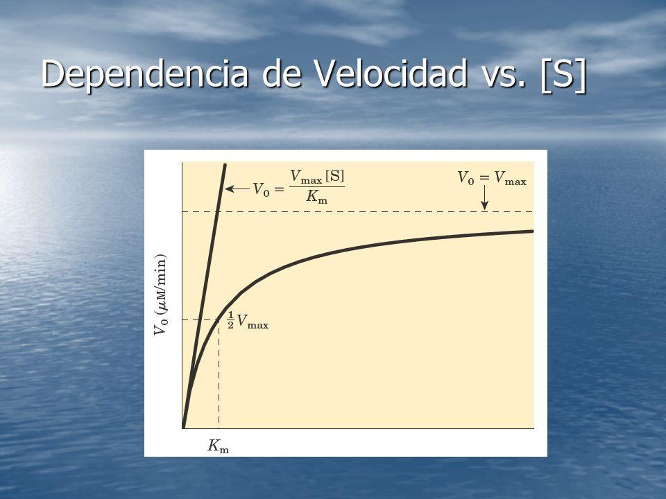 Dependencia de Velocidad vs. [S]